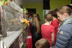 Exposición y distribución de gatos de un refugio Fotos de archivo libres de regalías