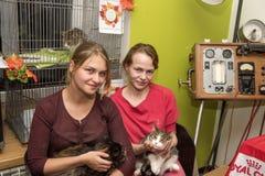 Exposición y distribución de gatos de un refugio Foto de archivo libre de regalías