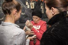 Exposición y distribución de gatos de un refugio Imagenes de archivo
