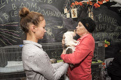 Exposición y distribución de gatos de un refugio Imagen de archivo libre de regalías