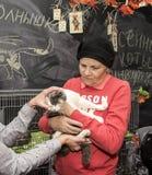 Exposición y distribución de gatos de un refugio Foto de archivo