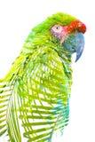 Exposici?n doble Fotografía de un loro tropical combinado con las hojas verdes claras fotos de archivo