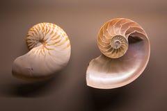 Exposición del museo en cáscaras del nautilus Foto de archivo