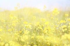Exposición doble de la floración del campo de flor, creando la foto abstracta y soñadora Fotografía de archivo libre de regalías