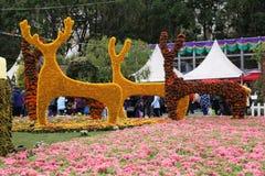 Exposición floral en Victoria Park Imagenes de archivo