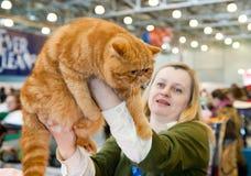 Exposición internacional de gatos Fotos de archivo libres de regalías