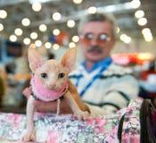 Exposición internacional de gatos Imagen de archivo libre de regalías