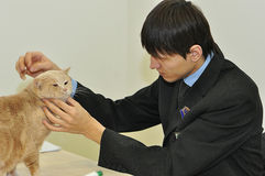 A exposição dos gatos Fotografia de Stock