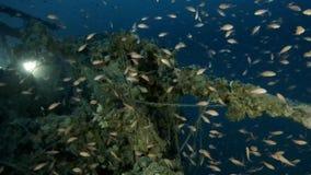 Exposion subaquático da vida no mar azul profundo vídeos de arquivo