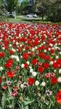 Expositiion colorido do festival da tulipa foto de stock royalty free