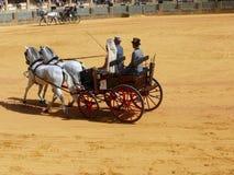 Exposition équestre à l'anneau de taureau de Ronda, Espagne Images stock