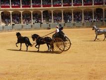 Exposition équestre à l'anneau de taureau de Ronda, Espagne Image libre de droits