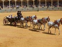 Exposition équestre à l'anneau de taureau de Ronda, Espagne Photo stock