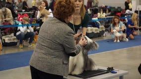 Exposition canine internationale CACIB-FCI clips vidéos