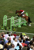 Exposition classique de cheval de Hampton photo libre de droits