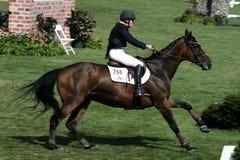 Exposition classique de cheval de Hampton image libre de droits