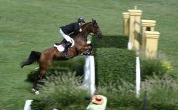 Exposition classique de cheval de Hampton image stock