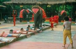 Exposition d'éléphant Photos stock