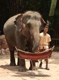Exposition d'éléphant asiatique Images stock