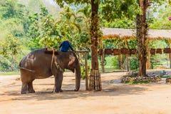 Exposition d'éléphant au centre thaïlandais de conservation d'éléphant, Images libres de droits