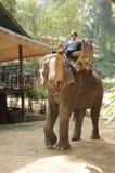 Exposition d'éléphant dans le camp d'éléphant de Maesa, Chiangmai Photographie stock libre de droits