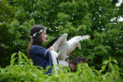Exposition d'oiseau images libres de droits