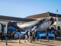 Exposition de ballon de baleine Images stock