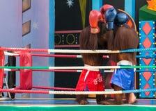 Exposition de boxe de singe Images libres de droits