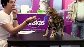 Exposition de chats banque de vidéos