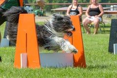 Exposition de chiens Image stock