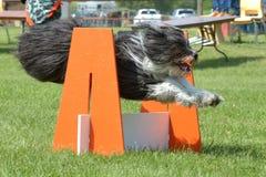 Exposition de chiens Photographie stock libre de droits