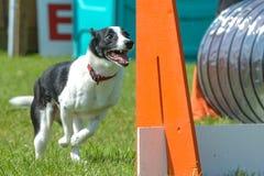 Exposition de chiens Images libres de droits