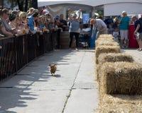 Exposition de course d'animal familier en Mckinney TX images stock
