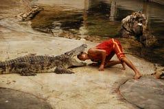 Exposition de Crocodylidae ou de crocodile image libre de droits