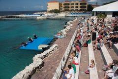 Exposition de dauphin à l'aquarium du Curaçao Image stock