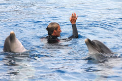 Exposition de dauphin Image libre de droits