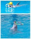 Exposition de dauphin Photo libre de droits