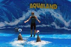Exposition de dauphin avec l'avion-école - Aqualand Tenerife image libre de droits