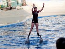 Exposition de dauphin dans l'aquarium Madrid de zoo photo libre de droits
