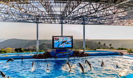 Exposition de dauphin dans la piscine Photo stock