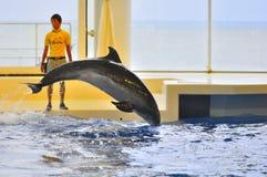 Exposition de dauphin en monde Mito Japon d'Aqua d'Oarai Images stock
