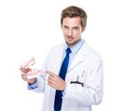 Exposition de dentiste avec le dentier image libre de droits