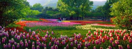 Exposition de fleur Images libres de droits