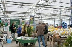 Exposition de fleur de jonquille de Nantucket Images stock