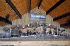 Exposition de moutons Photographie stock libre de droits
