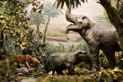 Exposition de musée d'histoire naturelle Image libre de droits