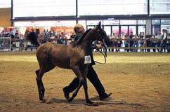 Exposition de race de cheval une vente aux ench?res ? la ?La rurale ? photos stock