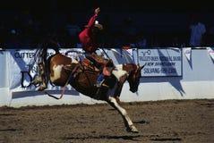 Exposition de rodéo de fiesta et de cheval de barre Photographie stock