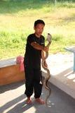 Exposition de serpent Image stock