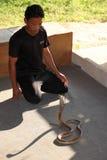 Exposition de serpent Image libre de droits